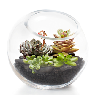 Grand Succulent Fishbowl